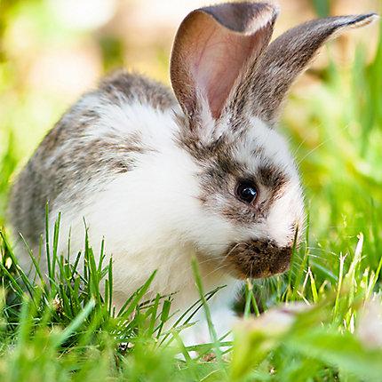 Merveilleux ... Rabbit