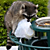 Raccoon Stealing Trash