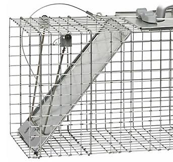 homemade bird trap instructions