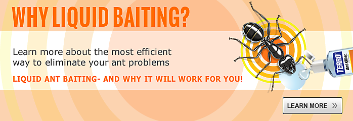 Learn About Baiting
