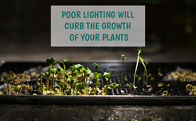 Without the proper lighting, hydroponic plants won't survive
