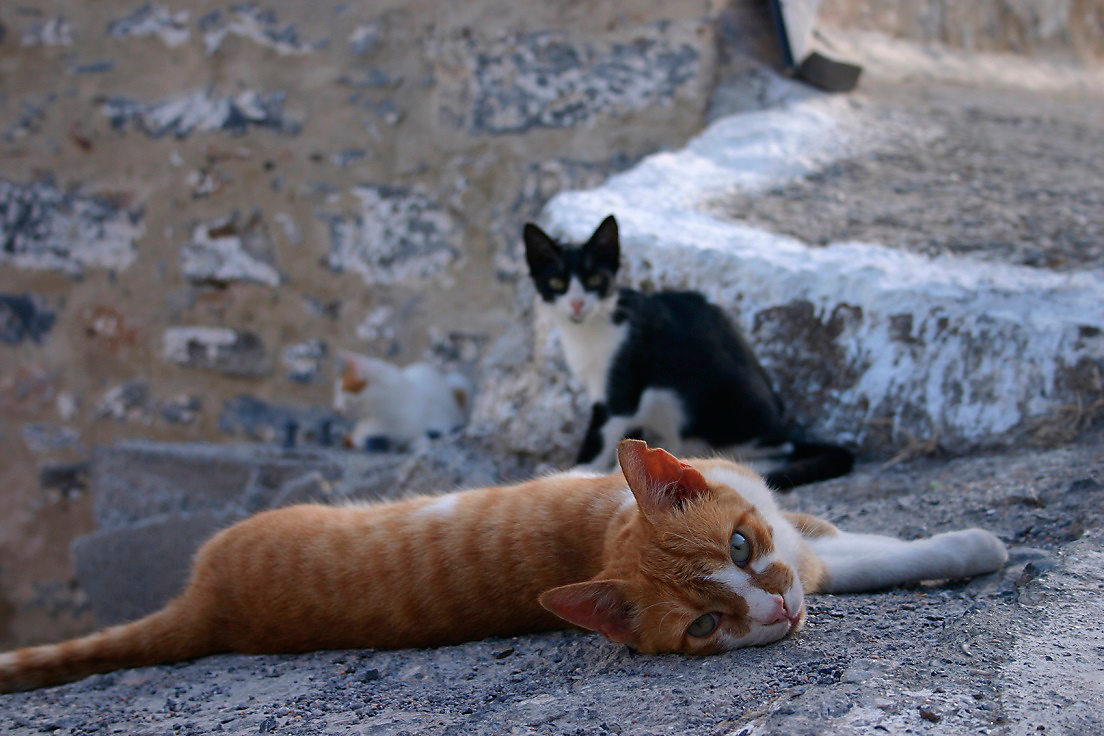 stray cats lounging