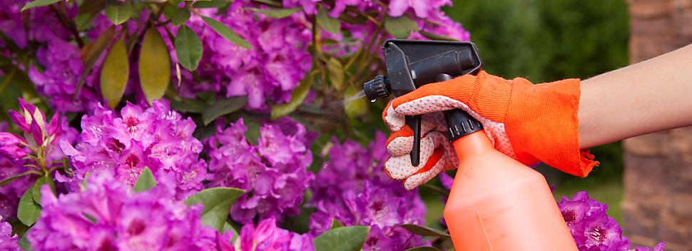 spraying pesticides on flowers