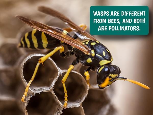Wasps in yard yellow jackets in yard hornets in yard