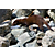Mink Climbing Rocks