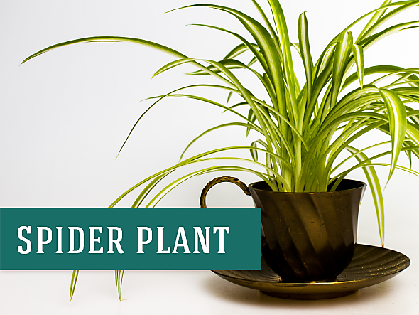 26 Best Indoor Plants for Your Home