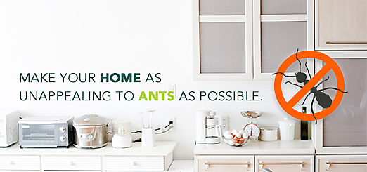 How to naturally get rid of ants in kitchen