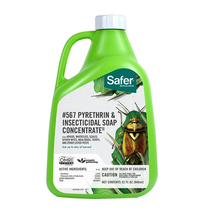 Safer Brand Insect Soap with Pyrethrin