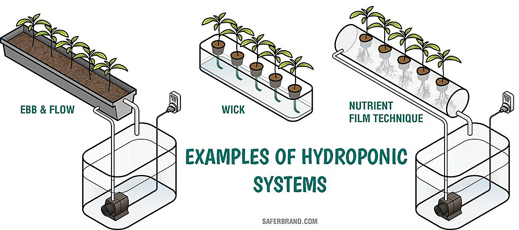 how to start tomato seeds for hydroponics
