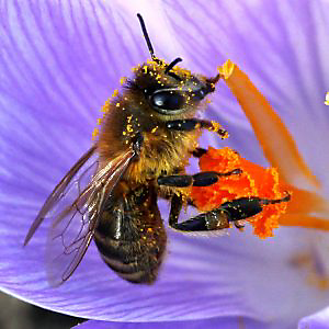 Getting rid of Africanized Bees
