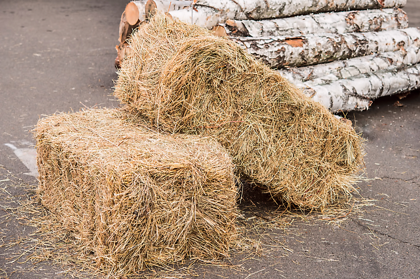 Beginner 39 S Guide To Straw Bale Gardening