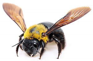 Stinging insects: Though some bees, wasps and hornets are relatively docile, most will sting if provoked.