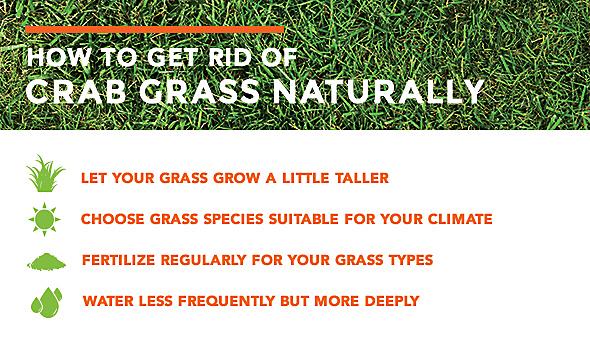 How Do You Get Rid Of Crabgrass Naturally