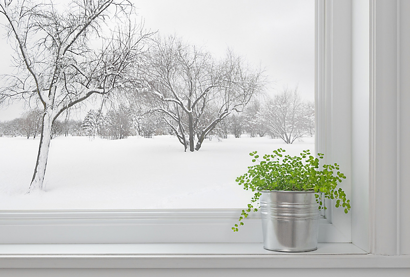 Drafty windows can hurt your houseplants