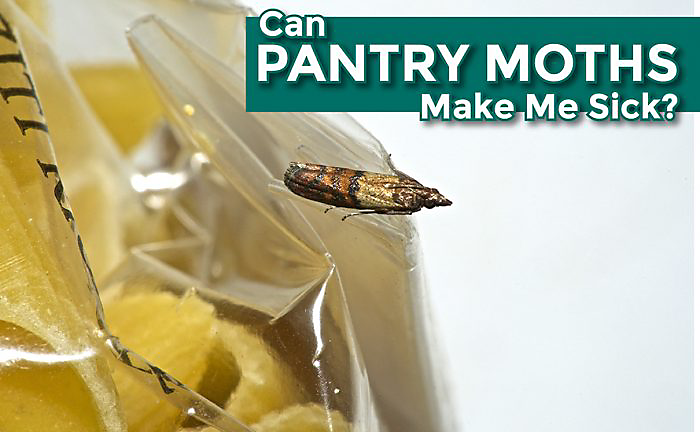 Can pantry moths make me sick for Moths in my pantry