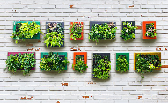 Garden Design Ideas - Vertical Gardens