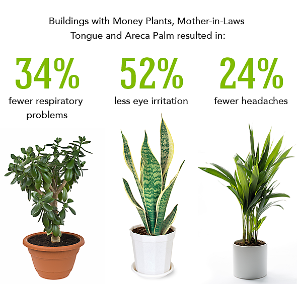 26 best indoor plants for your home Best small office plants