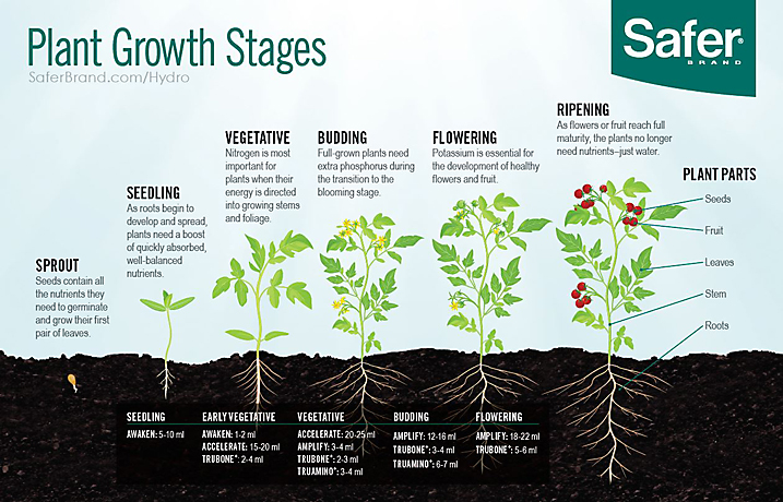 Plant Growth Stage Diagram