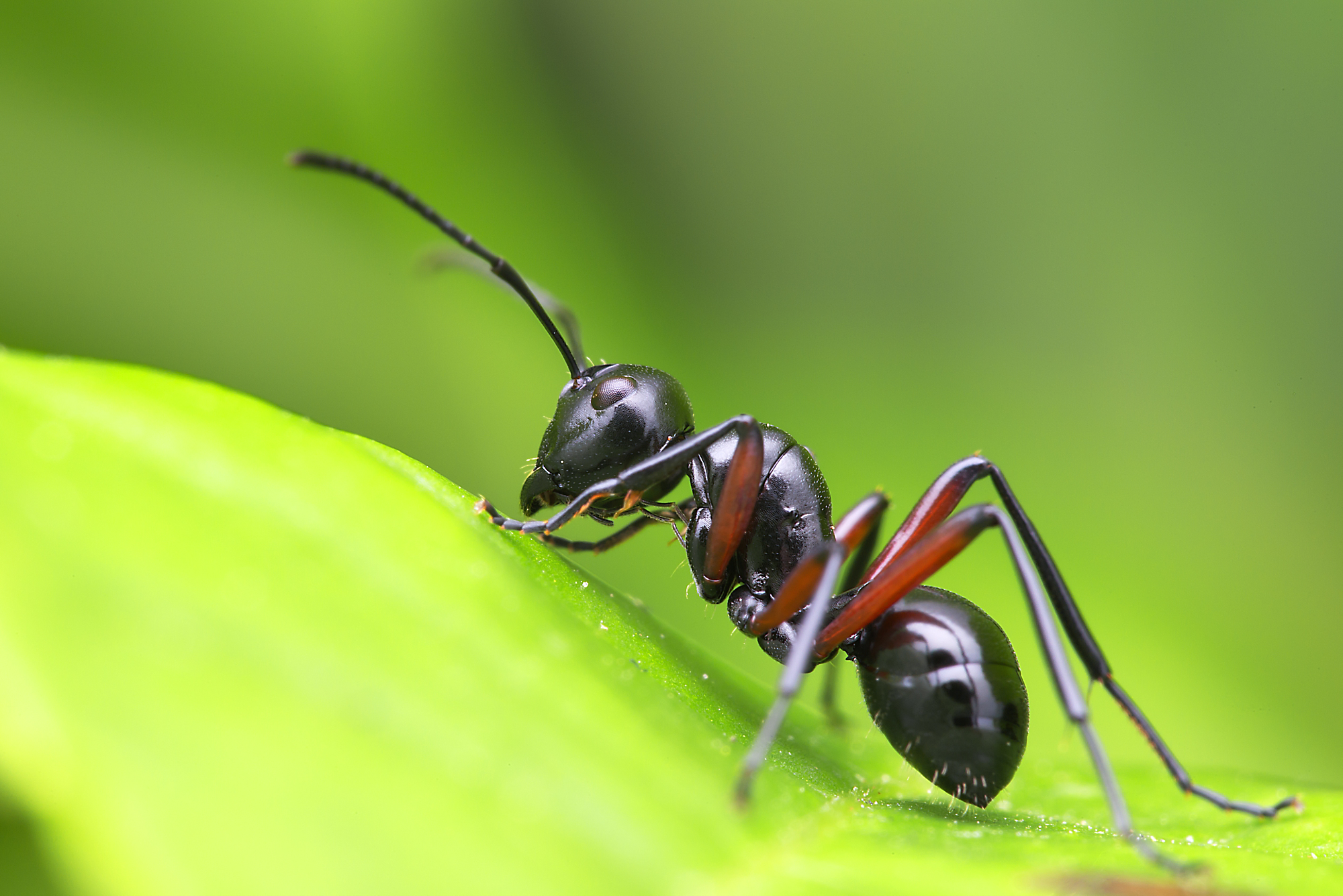ants emerge in Spring