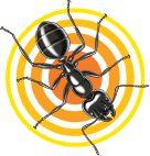 Terro Ant
