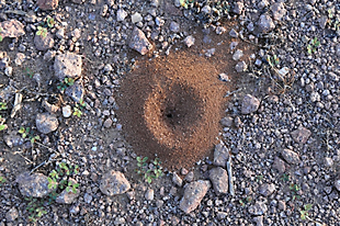 Signs of ants