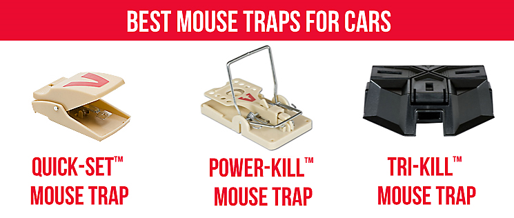Best Mouse Trap For Cars