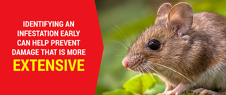 Here Are Some Signs That Indicate A Mouse Or Rodent Problem