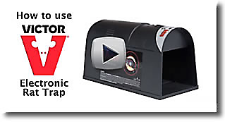 Electronic Rat Trap Video