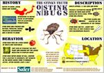 Information about Stink Bugs