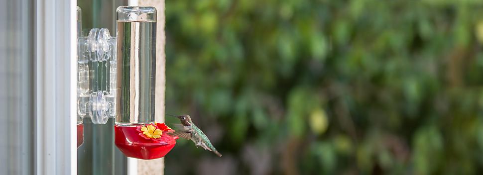hummingbirds visiting window mounted hummingbird feeder