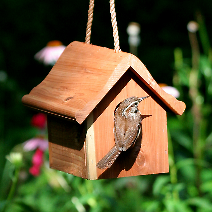 Best Bird Houses For Different Types Of Birds