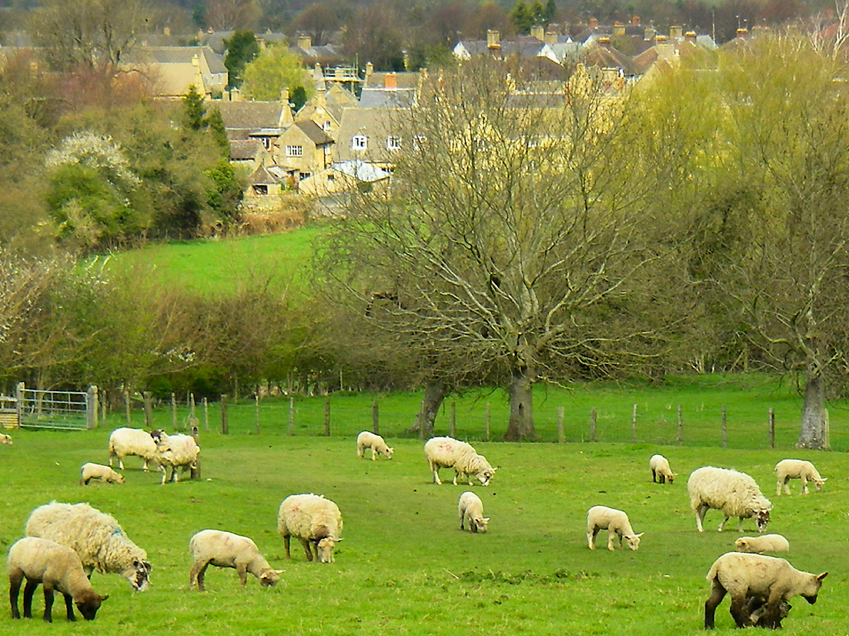 Plan your fence according to the type of livestock that will be contained by it. Sheep, for example, have a thick coat that doesn't conduct electricity well, so extra precautions are required.