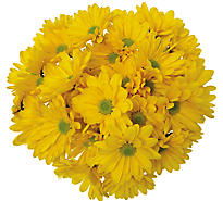 Poms 9 Stem - colors may vary