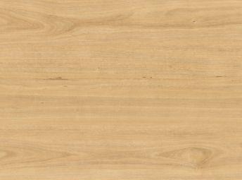 Tasmanian Oak 3X388801