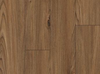 American Elm Butternut A6301