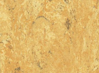 非洲杏 132-041