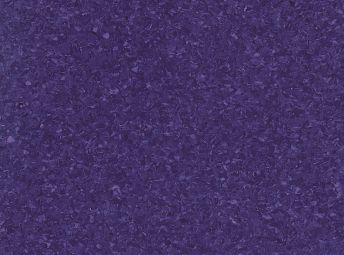 Hydrangea H5428