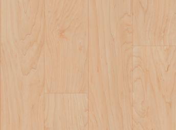 Solano Maple Honeysuckle NA170