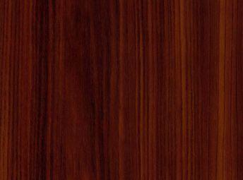 Torreya WI50012-04