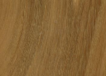 Australian Species Engineered Hardwood - Blackbutt