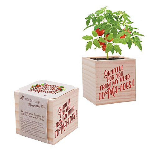 Appreciation Plant Cube-Grateful For You