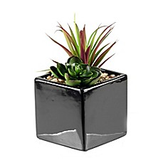 image of D&W Silks Mini Succulent and Echeveria in Square Ceramic Planter