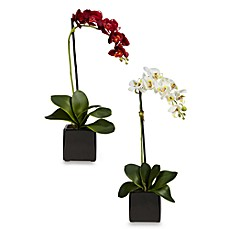 image of Nearly Natural Phaleanopsis Orchid w/Black Vase Silk Arrangement (Set of 2)