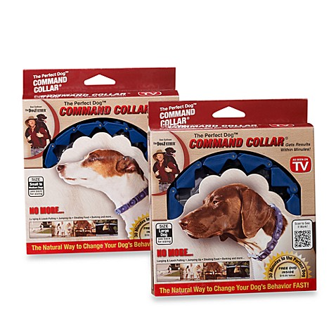 the perfect dog command collar dog training system   bed