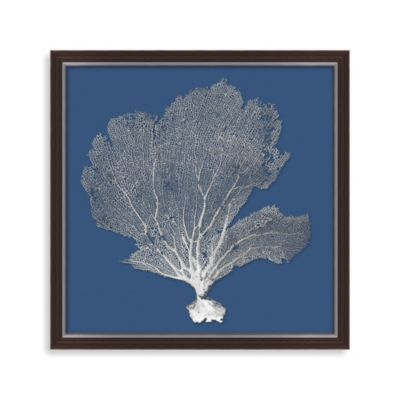image of Bahama Sea Fan Shadow Box