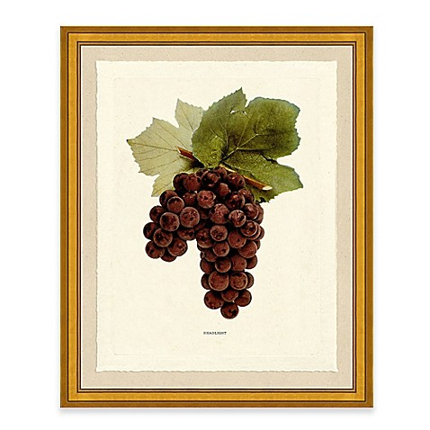 Teen posters art prints grapes