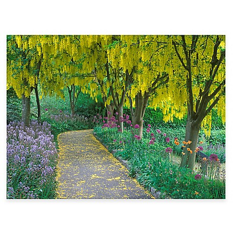 Goldenchain Tree All Weather Outdoor Canvas Wall Art - Bed Bath & Beyond