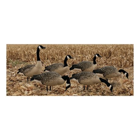 Avian-X Honker Goose Decoy Fusion Pack