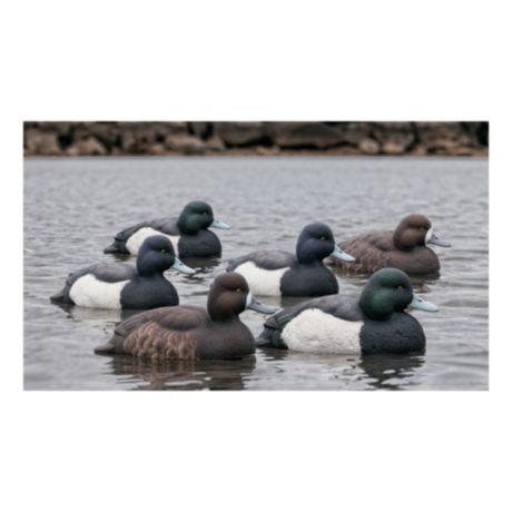 Avian-X Topflight Bluebill Duck Decoys – Six-Pack