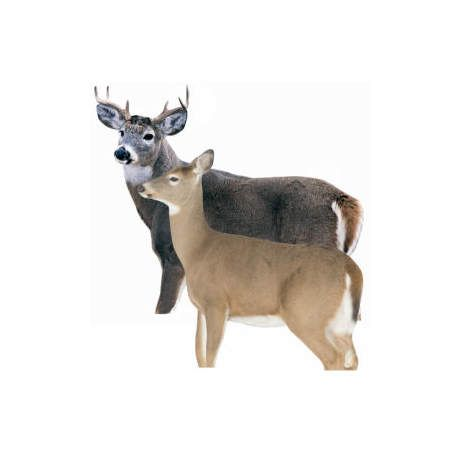 Montana Decoy Silhouette Buck and Doe Whitetail Deer Decoy